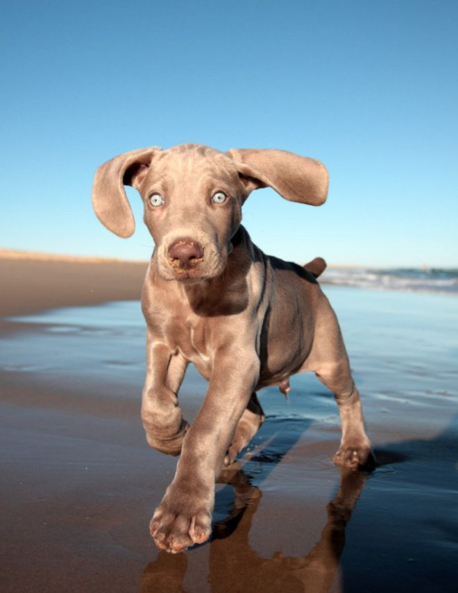 Best Dogs Images On Pinterest Animal Pics Chocolate And - 29 cutest dog photos existence