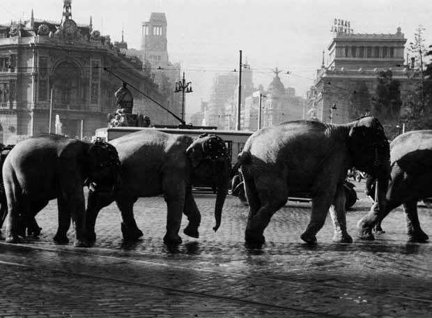 Elefantes paseando por Cibeles, en Madrid, en el año 1950.
