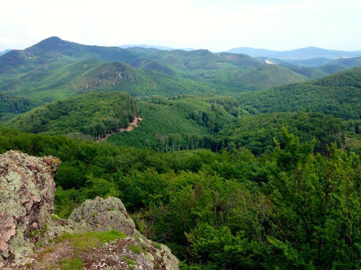 Tokaj hegyalja