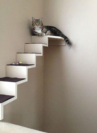 17 Best Images About Kat On Pinterest Cat Shelves