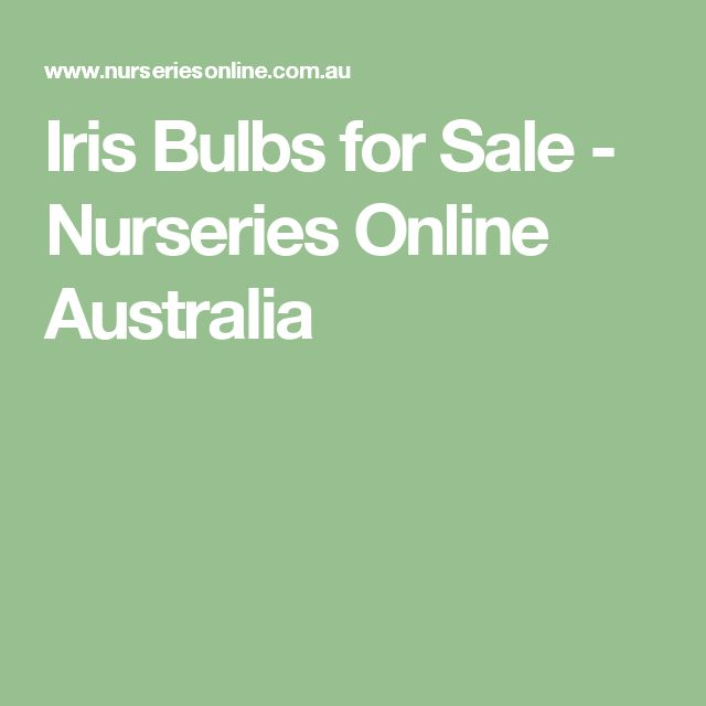Iris Bulbs for Sale - Nurseries Online Australia