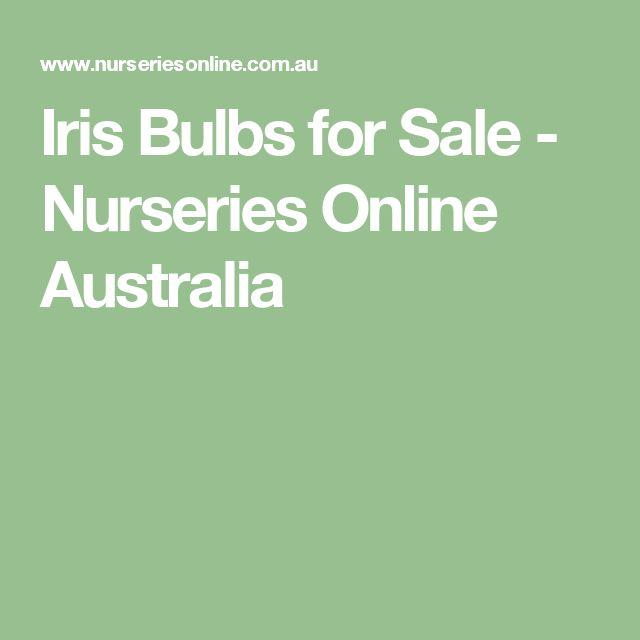 Iris Bulbs for Sale - Nurseries Online Australia