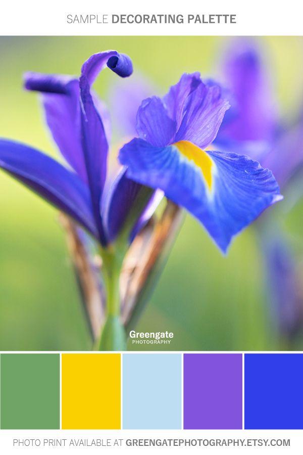 Blue Iris Photography Flowers Photography Flower Garden Plans Flowers