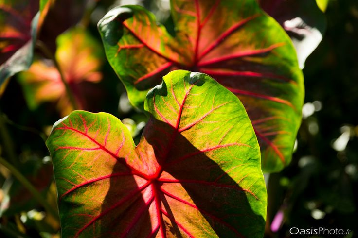 Colorful tropical leaf by Thomas R. on 500px