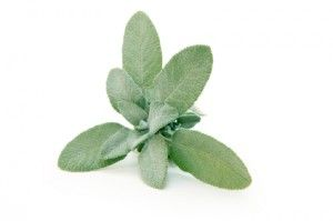 Sage Tea Uses good for sore throats,excessive sweating,hot flashes,inflamations of throat and mouth,anti-bacterial,antifungal,and anti-viral.