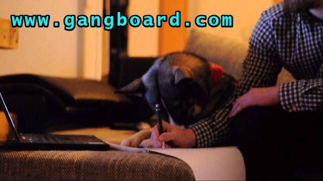 Get Data Science Online Training @ GangBoard