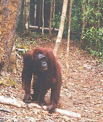 A Trip Story in Tanjung Puting National Park with FNPF