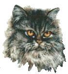 Tanya's umfassendes Handbuch über chronisches Nierenversagen bei Katzen - Verstopfung