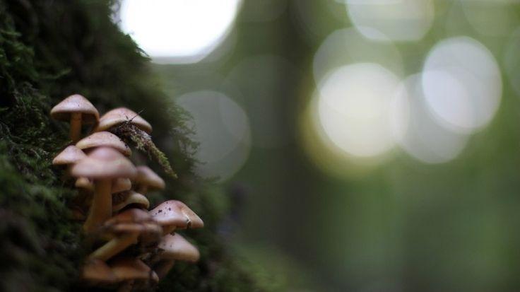 Magic Forest Photo - Visual Hunt