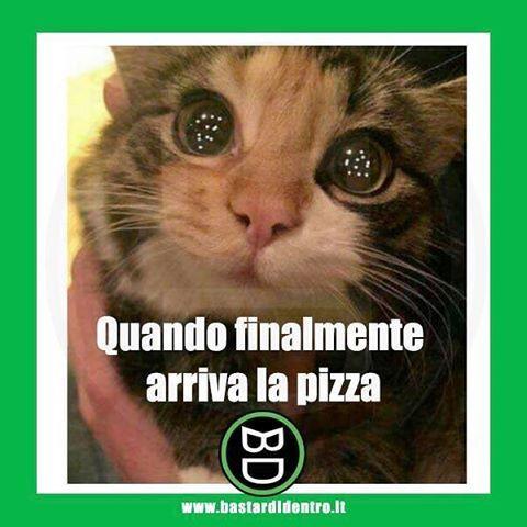 Non esiste gioia più grande! Seguici su youtube/bastardidentro #bastardidentro #pizza #fame #gatto www.bastardidentro.it