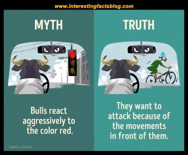 Myths About Bulls