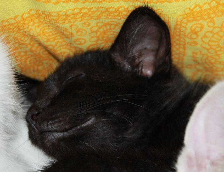Rita, 10 weeks old