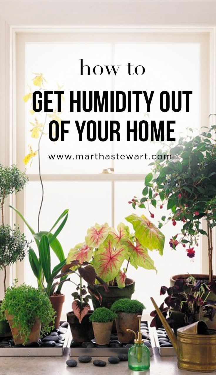 How to Get Humidity Out of Your Home | Martha Stewart Living - It's not just the heat that gets us during the summer -- sweet, sticky humidity creeps into our lives like a blob. And with the humidity comes a swampy, muggy home (and a lot of bad-hair days). We can't say much about the hair, but here are a few tips, direct from Martha's Homekeeping Handbook, that will help you take care of your home during the drippier months of the summer.