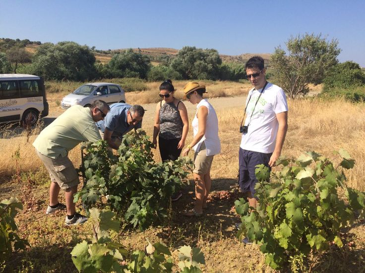 Our visit to Mr Manolis Garalis' vineyard on Sunday, July 24 at Limnos Island, Greece.