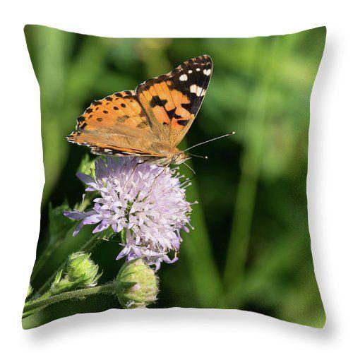 Natalya Antropova Throw Pillow featuring the photograph Lunch In Nature by Natalya Antropova #NatalyaAntropovaFineArtPhotography#ArtDecor#HomeDecor#pillow