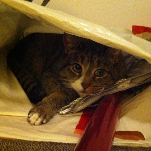 My cat, Laney