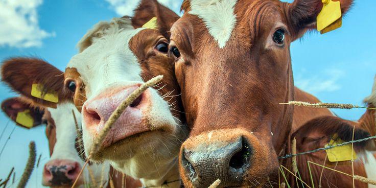 Okuyucularımızdan gelenler: Geleceğin Katilleri-  #veganizm #hayvanhakları