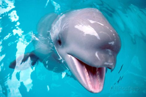 beluga prints whale baby