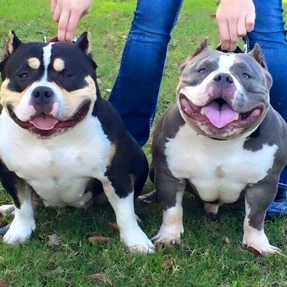 Big, cute, n wide. :) Bullies. More