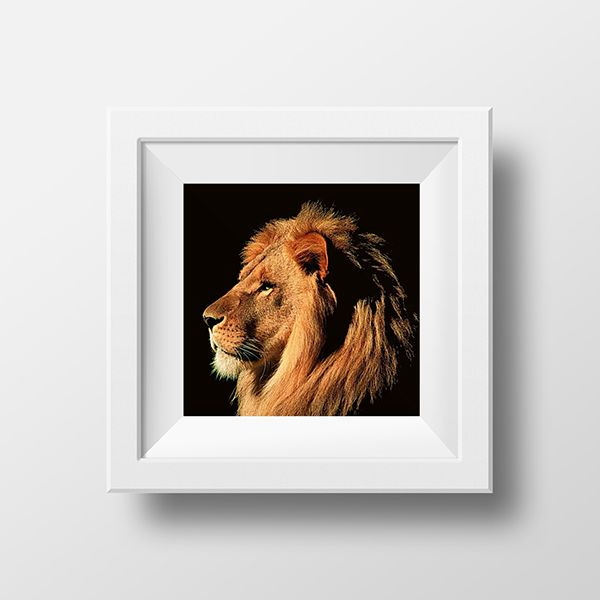 an illustration of a lion by Nancy Skerletidou, via Behance