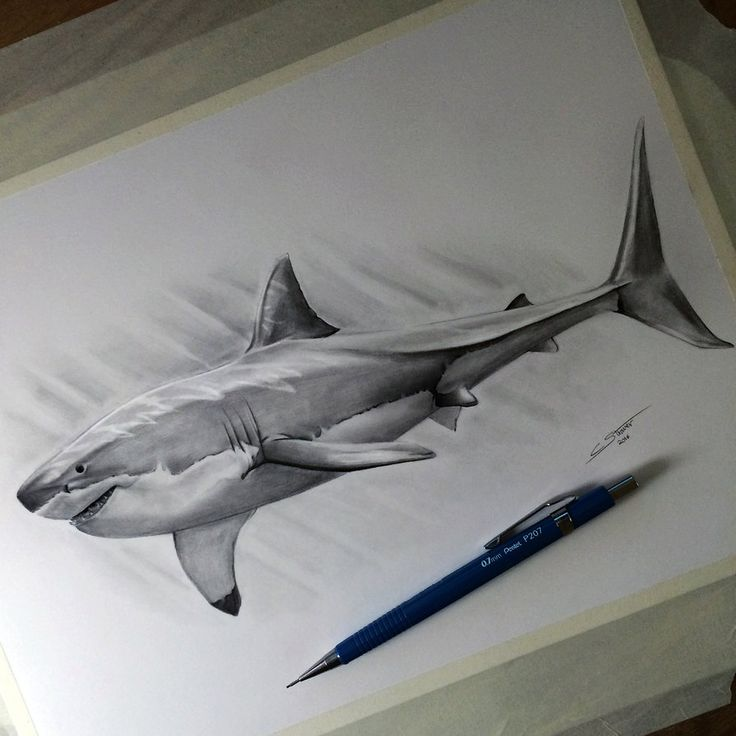 My drawing of a great white shark!  Time lapse video: www.youtube.com/watch?v=Dsd61_… Let me know what you think. Thanks!