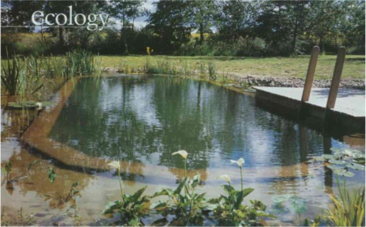 114 Best Natural Pools Images On Pinterest Natural Swimming Pools Backyard Ideas And Ponds