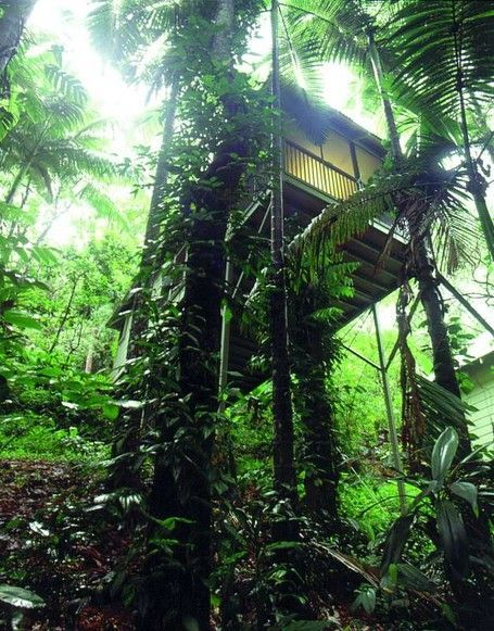 Daintree Eco Lodge and Spa in Australia  #EcoFriendly #Lodging #Luxury #Travel  www.AZFoothills.com