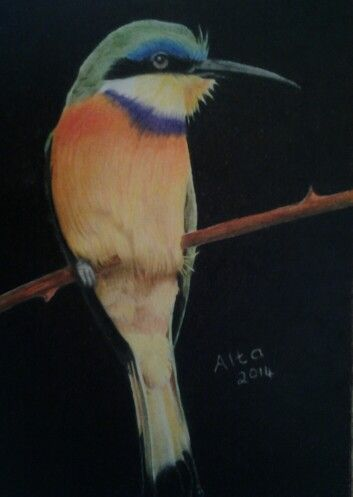 Bee-eater on white card with Polychromos pencils.