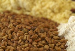 Fenugreek is an herb used for medicinal purposes and in cooking from time immemorial. It was even described on an Egyptian papyrus dating back to 1500 B.C., according to the National Center for Complementary and Alternative Medicine. Breastfeeding women experiencing low milk supply may use fenugreek to help boost their milk volume, but it's...
