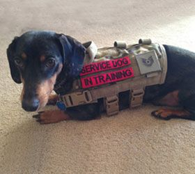 ForceK9.com MOLLE vests - Gear for Elite Canines - This is ...