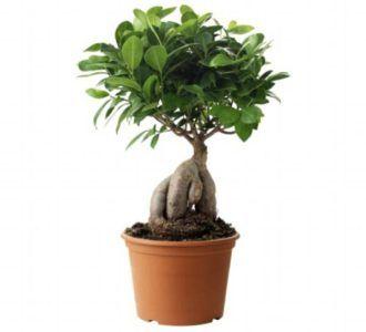12 besten pflanzen f r dunkle ecken bilder auf pinterest dunkel pflanzen und zimmerpflanzen - Zimmerpflanzen dunkel ...
