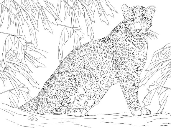 Leopard Sitting on Tree Coloring page Cat coloring page