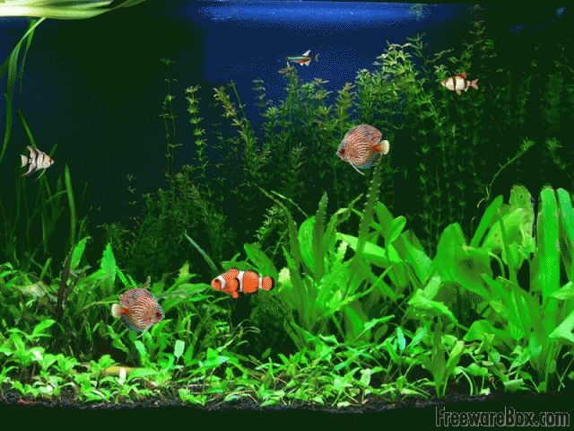 Free animated screensavers with sound screenshot of free Aquarium free days