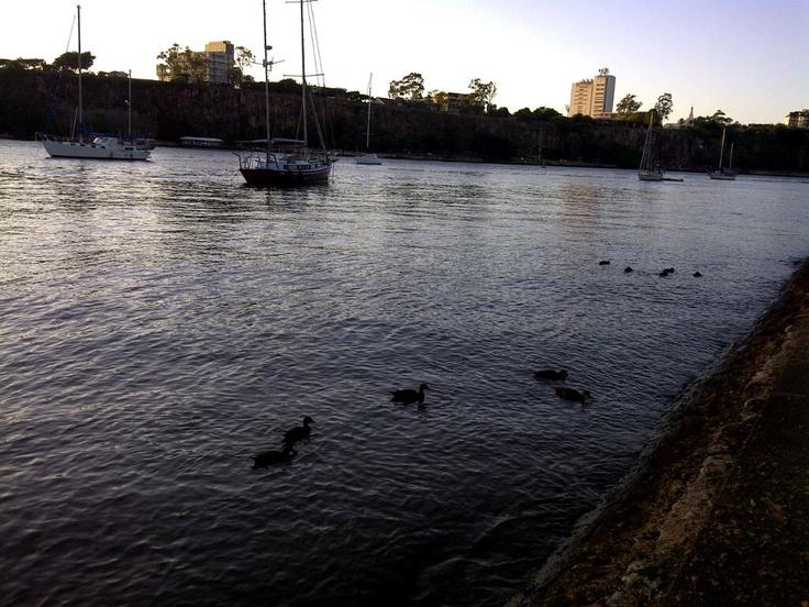 Ducks on the river near the Botanical Gardens