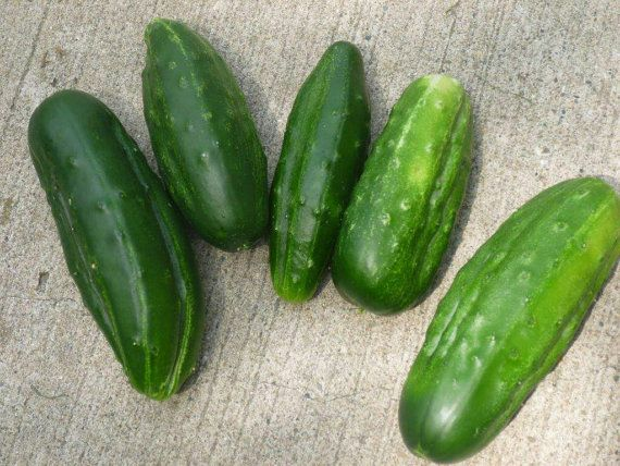 Petite cucumber seed 6