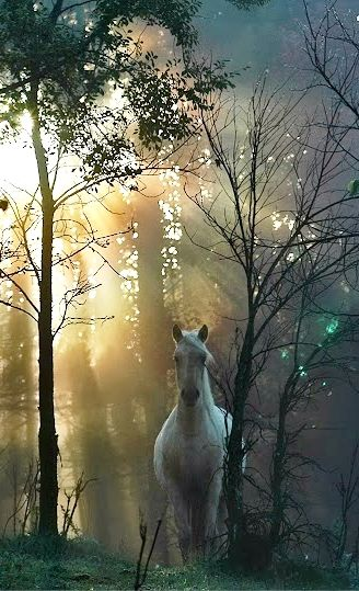 Beautiful horse in light