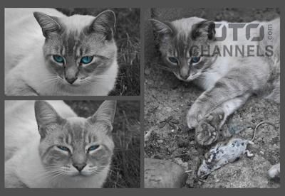 Fotochannels - black or white