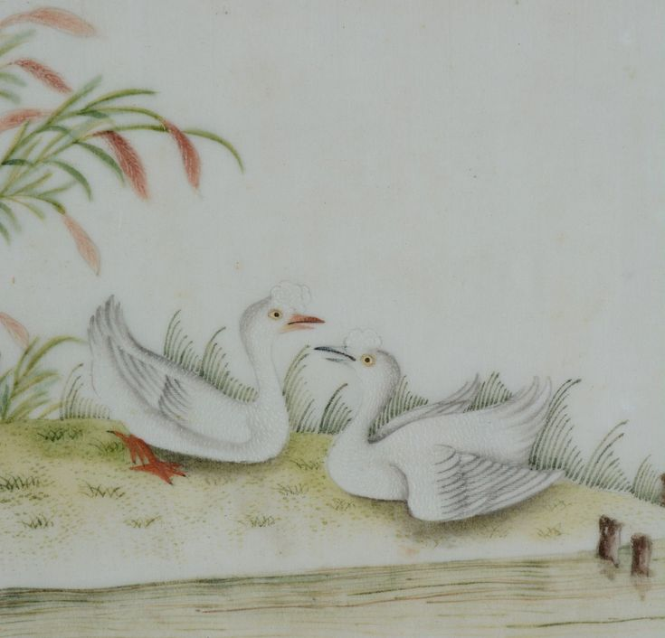 Chinese Pith Rice Paper Painting Two White & Grey Geese next to a Pond Qing | eBay
