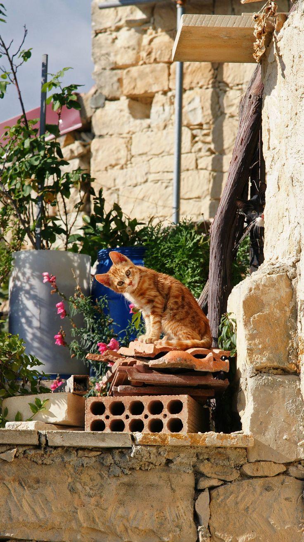 Cat in Limassol, Cyprus