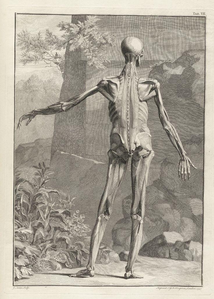 """Bernhard Siegfried Albinus (1697 – 1770) fu un anatomista olandese. Suo padre Bernhard Albinus senior si trasferì a Leida nel 1702 per insegnare nella facoltà di Medicina.  Tra i docenti di Albinus junior vi fu anche il grande Boerhaave.  Bernhard Siegfried Albinus è noto soprattutto per le sue """"Tabulae sceleti et musculorum corporis humani"""", che vennero pubblicate a Leida nel 1747. L'artista che disegnò le tavole fu Jan Wandelaar (1690-1759)."""