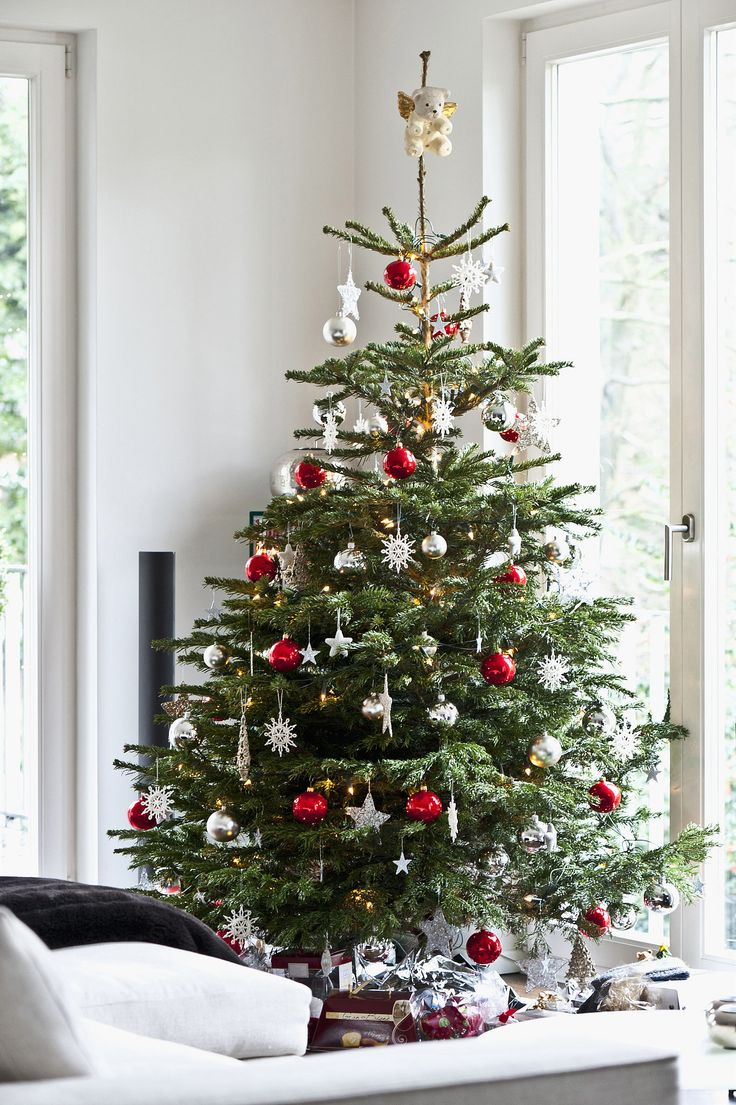 11 tips for decorating your holiday tree like a pro - Mini Live Christmas Trees