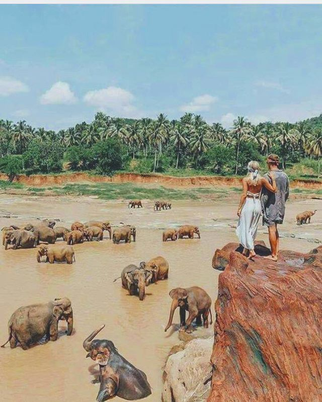 Follow @ecoconltd for more inspiring posts!  -  Want to be featured? Use the hashtag #ecoconftme :)  @elephant.lover.s