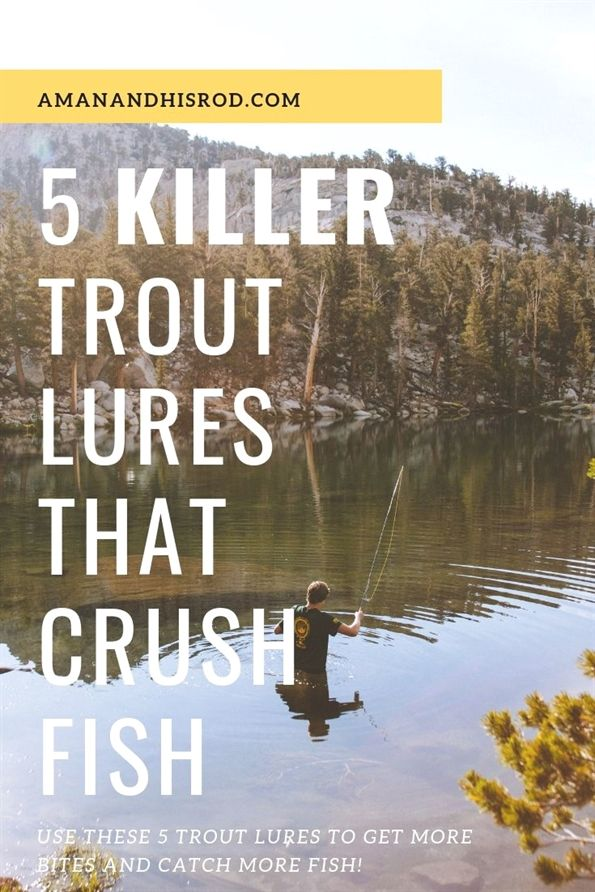 Fishing For Food What Are The Best Fish To Eat Trout Fishing