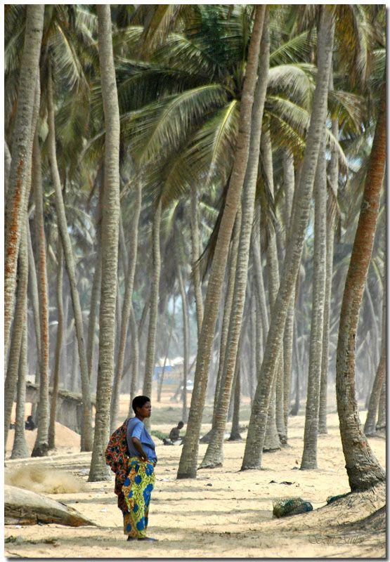 Benin: Among the palmtrees  (Copyright © – Attila Szili)