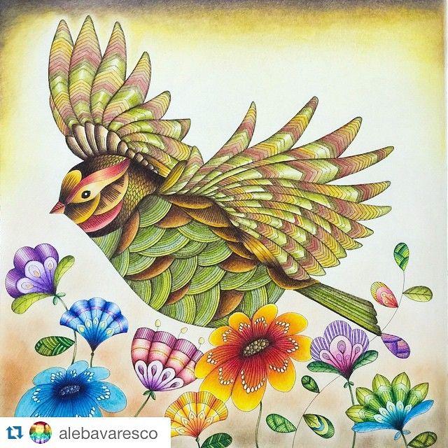 Começando o dia bem com esse lindo colorido do @alebavaresco! Divine! ・・・ #passarofet #fundofet Reino Animal