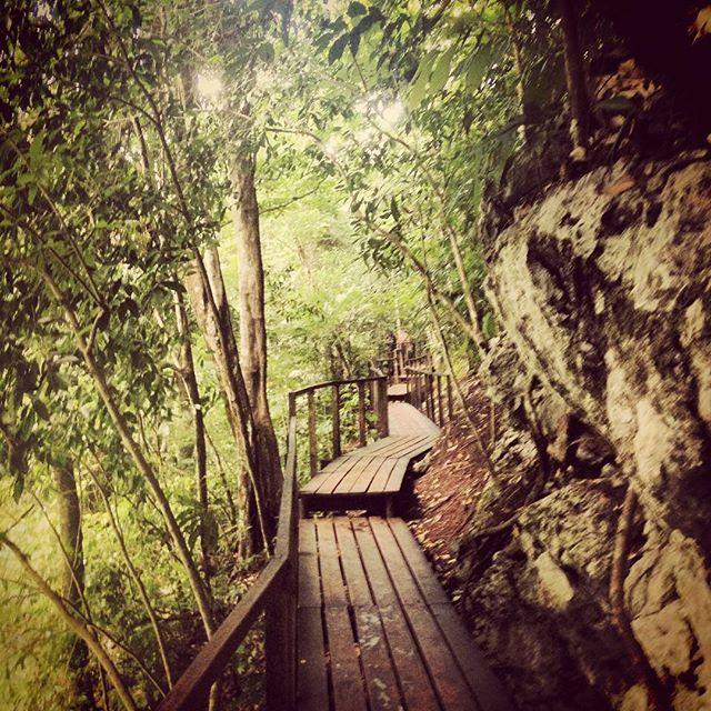 #stairs #jungle #semucchampey #travelphotography #explorandoguatemala #iminheaven #green #brown #guatemala #lugaresimperdibles @lovelystreetsofficial