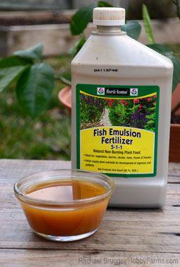 10 Natural Fertilizers to Improve Crop Production - Photo by Rachael Brugger (HobbyFarms.com)