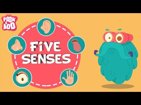 The Five Senses | The Dr. Binocs Show | Learn Series For Kids - YouTube