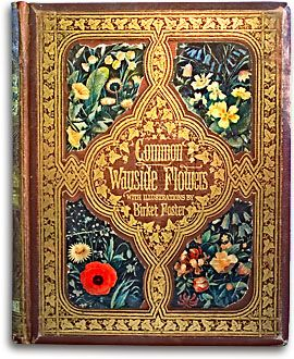 Thomas Miller, Common Wayside Flowers. Illustrated by Birket Foster.  London: Routledge, Warne & Routledge, 1860.