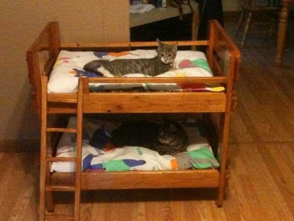 17 meilleures id es propos de lit pour chien en palettes sur pinterest lits pour chien et. Black Bedroom Furniture Sets. Home Design Ideas